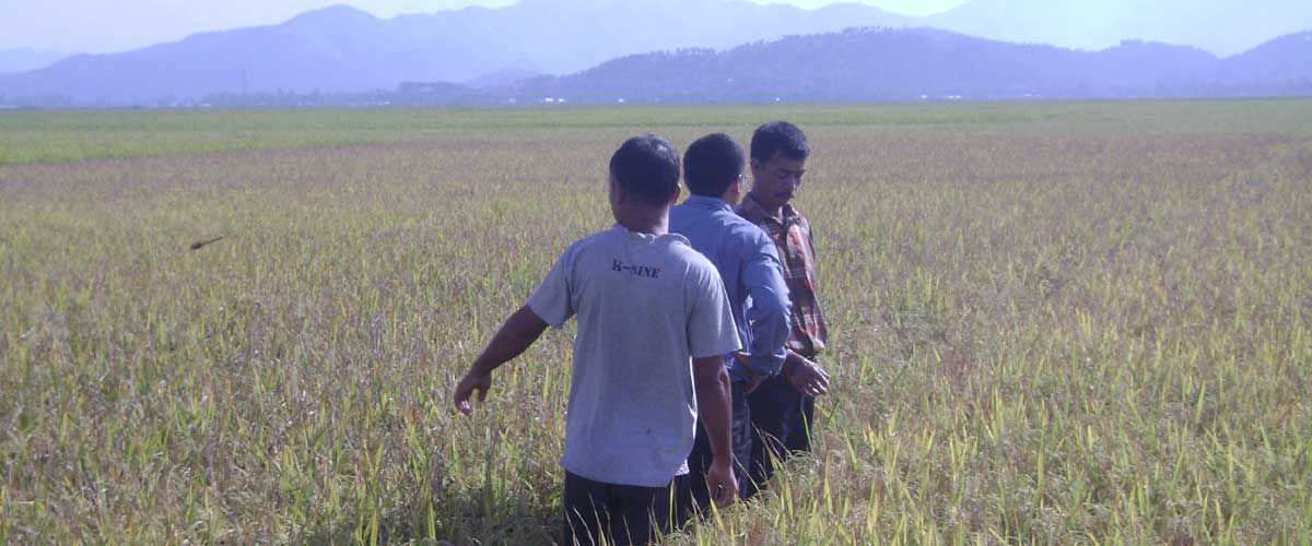 FOOD SECURITY & ENSURING A SUSTAINABLE IMPACT