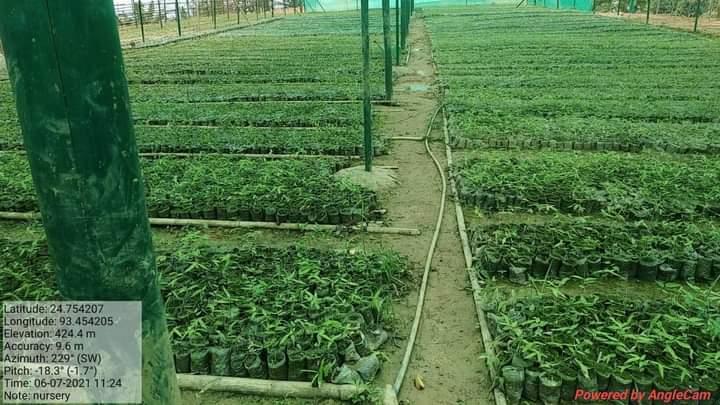 Bamboo Nursery Available